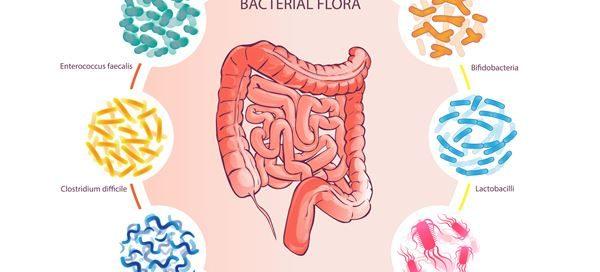 arriola-fisioterapia-probiotico-prebiotico